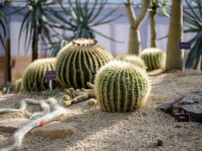 serres-conservatoire-botanique