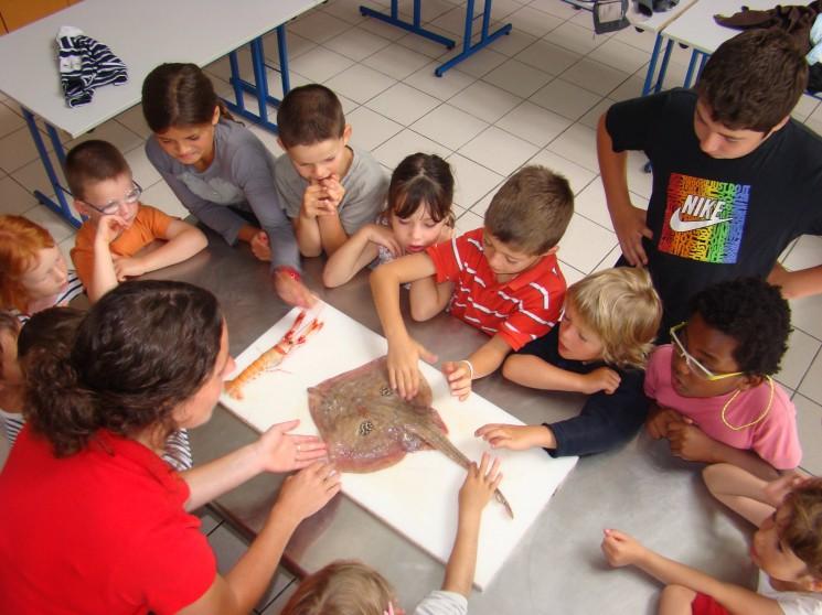 Ateliers enfants, Haliotika