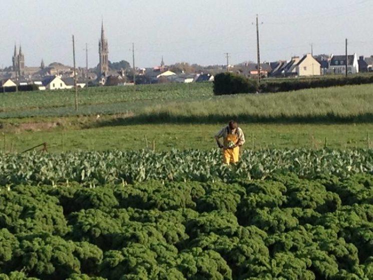 Légumes Project à St Pol de Léon