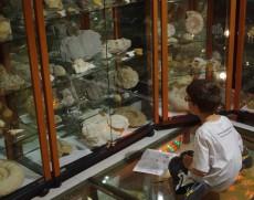 fossiles-enfant