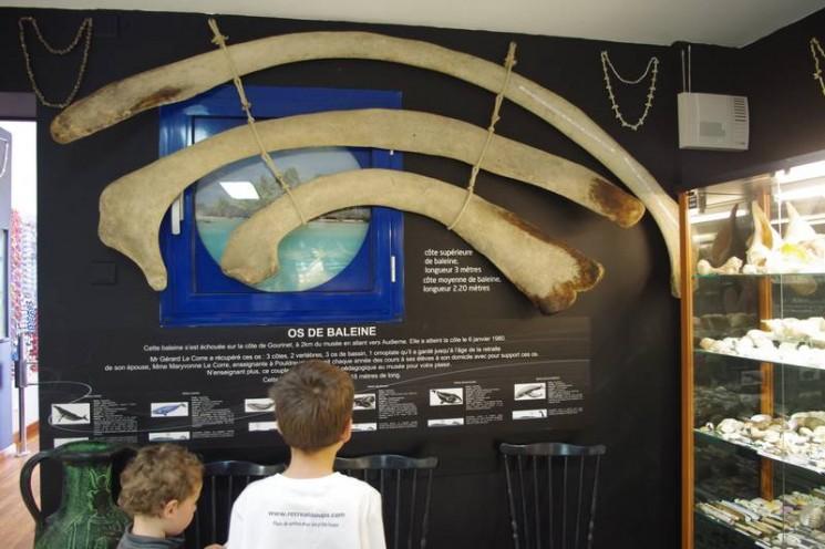 Os de baleine