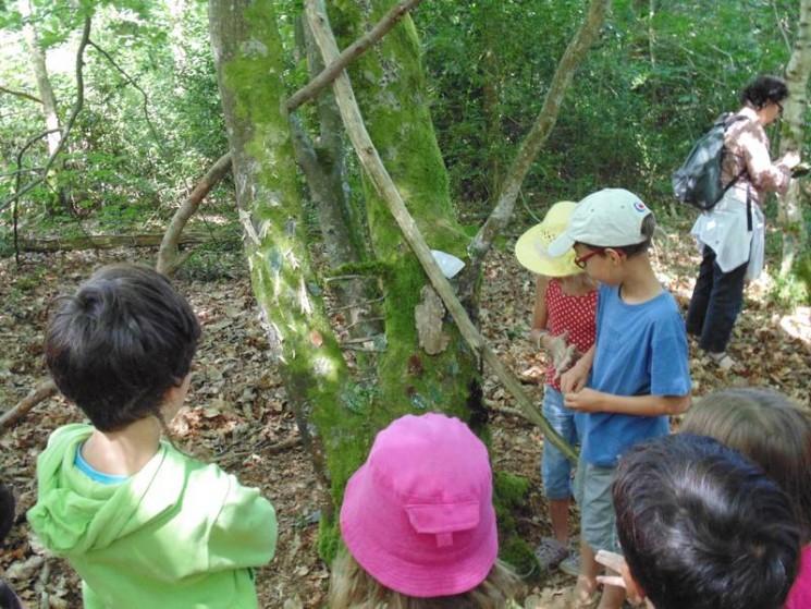 Notre arbre-totem