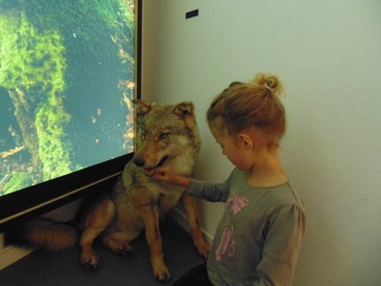 Un loup inoffensif