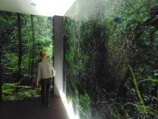musee-du-loup-finistere