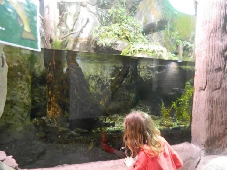 Un aquarium et...