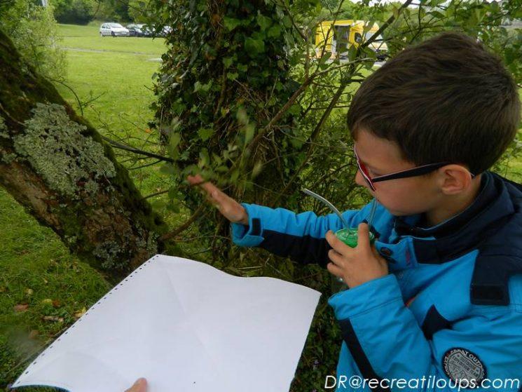 Observation des insectes
