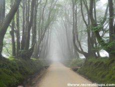 menez-meur-brouillard