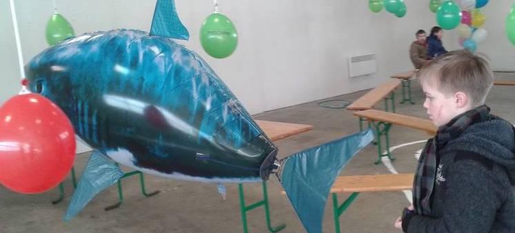 Haliotika-permis-requin