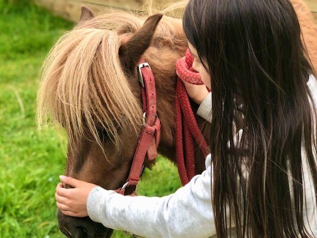 Des balades à poney