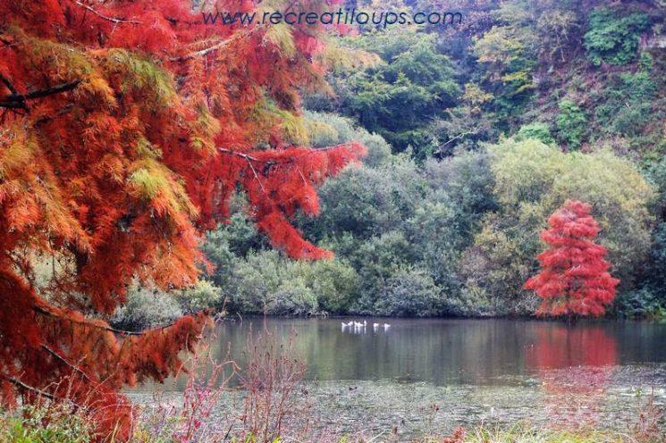 Balade d'automne en famille