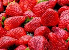 fraise-musee-plougastel