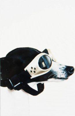 dan-da-dan-dog-theatre-brest