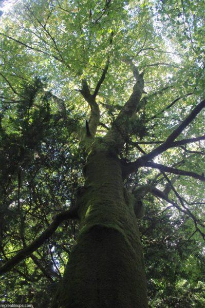 Observation des arbres